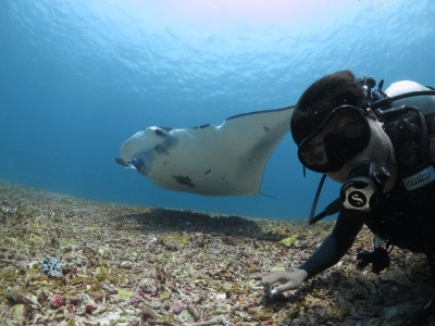 Meet marine wildlife